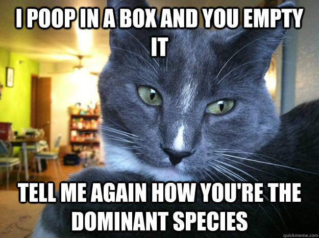 i poop in a box and you empty it tell me again how you're the dominant species  condescending cat