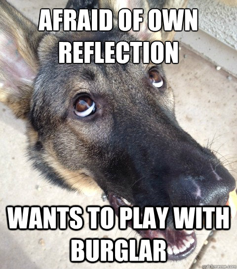 Afraid of own reflection Wants to play with burglar
