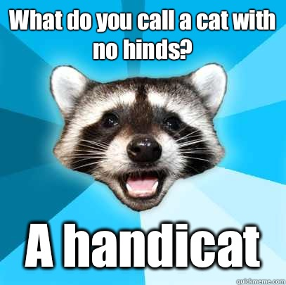 What do you call a cat with no hinds? A handicat  - What do you call a cat with no hinds? A handicat   Lame Pun Coon