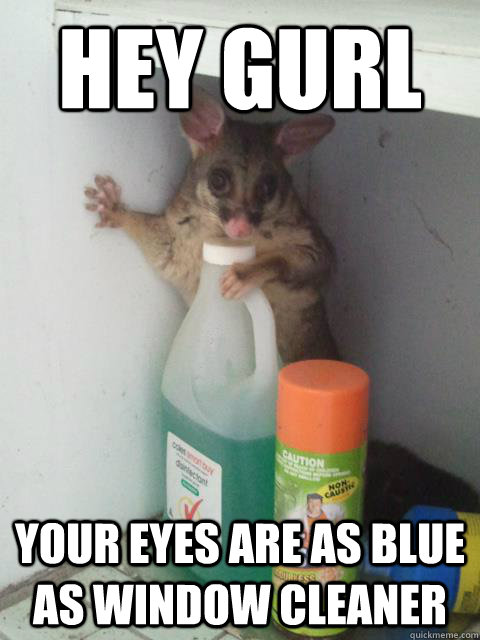 Hey Gurl Your eyes are as blue as window cleaner  Awesome Possum