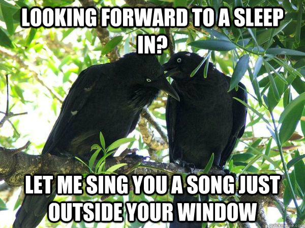 Looking forward to a sleep in? Let me sing you a song just outside your window - Looking forward to a sleep in? Let me sing you a song just outside your window  Misc