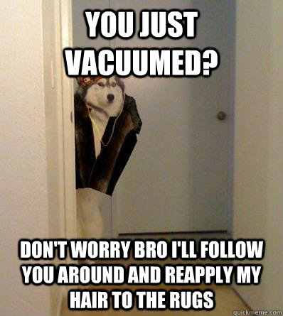 YOU JUST VACUUMED? DON'T WORRY BRO I'LL FOLLOW YOU AROUND AND REAPPLY MY HAIR TO THE RUGS - YOU JUST VACUUMED? DON'T WORRY BRO I'LL FOLLOW YOU AROUND AND REAPPLY MY HAIR TO THE RUGS  Scumbag dog