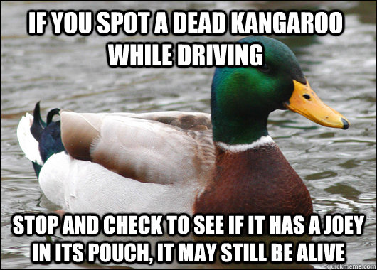 if you spot a dead kangaroo while driving stop and check to see if it has a joey in its pouch, it may still be alive - if you spot a dead kangaroo while driving stop and check to see if it has a joey in its pouch, it may still be alive  Actual Advice Mallard