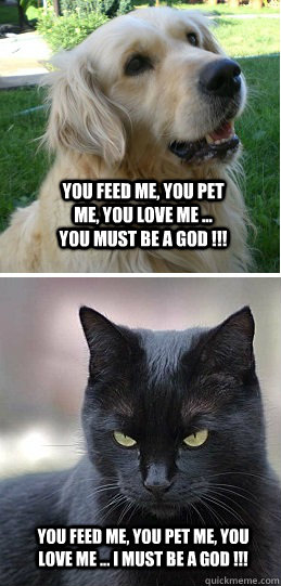 You feed me, you pet me, you love me ... You must be a God !!! You feed me, you pet me, you love me ... I must be a God !!!  Dogs Vs Cats