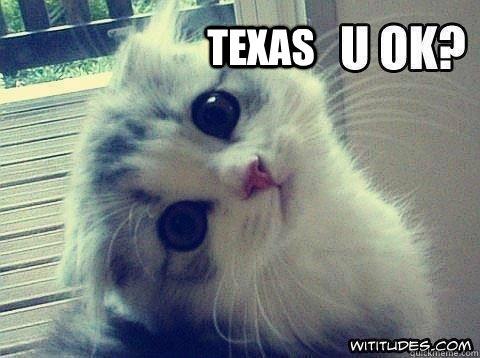Texas - Texas  Severe weather kitten