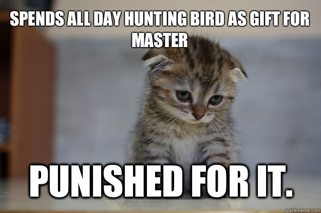 Spends all day hunting bird as gift for master Punished for it. - Spends all day hunting bird as gift for master Punished for it.  Sad Kitten