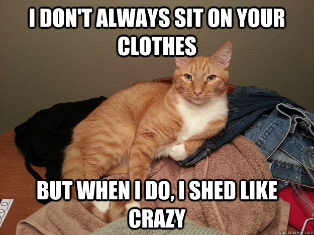 I don't always sit on your clothes But when i do, i shed like crazy - I don't always sit on your clothes But when i do, i shed like crazy  Most Interesting Cat