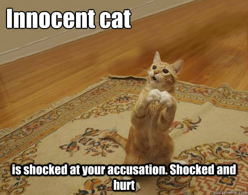 Innocent cat is shocked at your accusation. Shocked and hurt