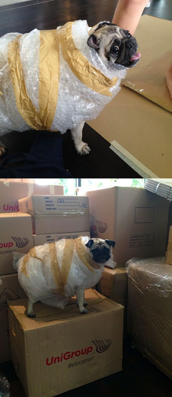 My Girlfriend is moving, she left her sister alone and then this happened... -   Misc