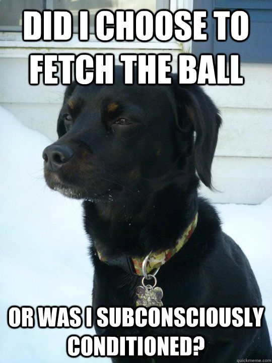 did i choose to fetch the ball or was i subconsciously  conditioned?  Philosophical Puppy