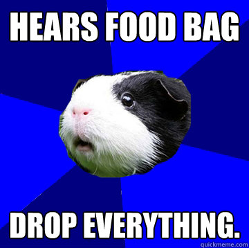 Hears food bag  DROP EVERYTHING.