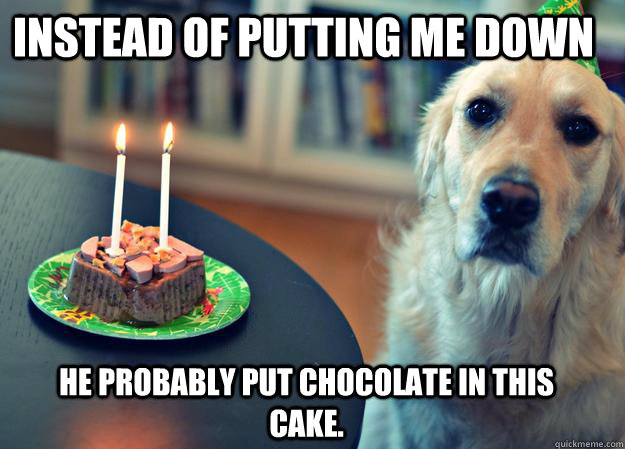 Instead of putting me down he probably put chocolate in this cake. - Instead of putting me down he probably put chocolate in this cake.  Sad Birthday Dog