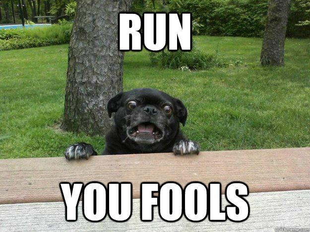 RUN YOU FOOLS  run fools