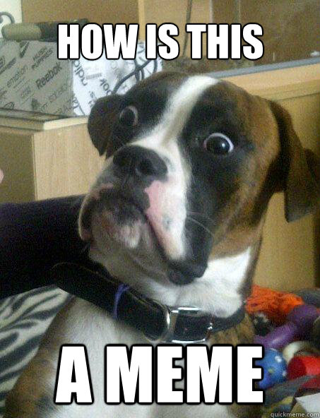 HOW IS THIS A MEME - HOW IS THIS A MEME  Baffled boxer