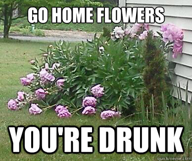 Go home flowers you're drunk - Go home flowers you're drunk  Misc