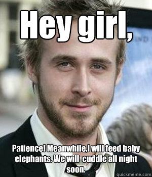 Hey girl, Patience! Meanwhile,I will feed baby elephants. We will  cuddle all night soon. - Hey girl, Patience! Meanwhile,I will feed baby elephants. We will  cuddle all night soon.  Misc