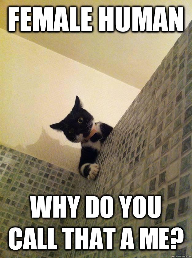 Female human  Why do you call that a me? - Female human  Why do you call that a me?  Incredulous Cat