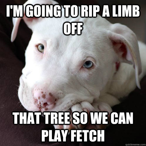 I'm going to rip a limb off that tree so we can play fetch - I'm going to rip a limb off that tree so we can play fetch  Misunderstood Pit Bull
