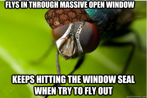 Flys in through massive open window Keeps hitting the window seal when try to fly out - Flys in through massive open window Keeps hitting the window seal when try to fly out  Scumbag Fly