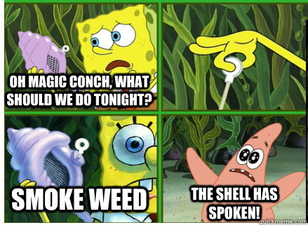 Oh Magic Conch, what should we do tonight? Smoke Weed The SHELL HAS SPOKEN!
