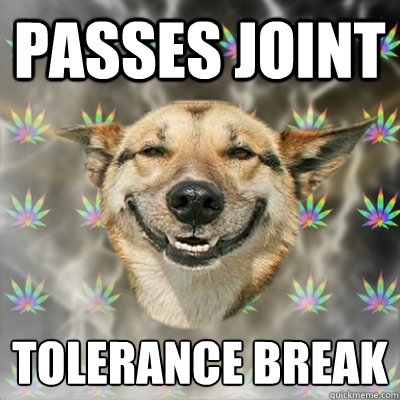 Passes joint tolerance break  - Passes joint tolerance break   Stoner Dog