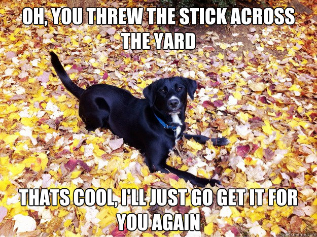 Oh, you threw the stick across the yard Thats cool, I'll just go get it for you again