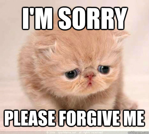 I'm sorry Please forgive me  Sorry Cat
