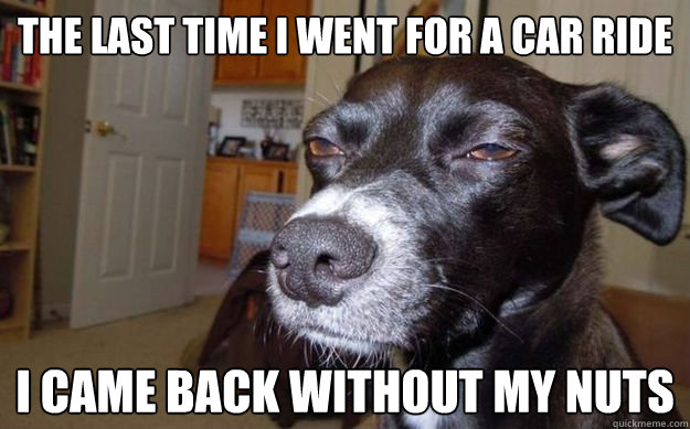 The last time I went for a car ride I came back without my nuts - The last time I went for a car ride I came back without my nuts  Skeptical Mutt