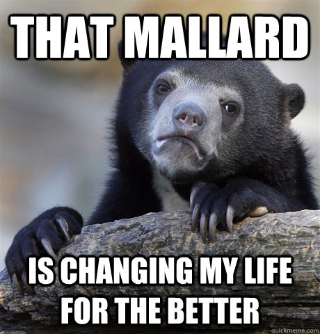 That mallard is changing my life for the better - That mallard is changing my life for the better  Confession Bear