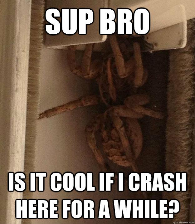 c43878e6dddf3f46cd1ab7cc0cc5d3c0de95a38ba6e6b9e4a7e17bf2f3e34356 sup bro is it cool if i crash here for a while? douchebag spider,Sup Meme