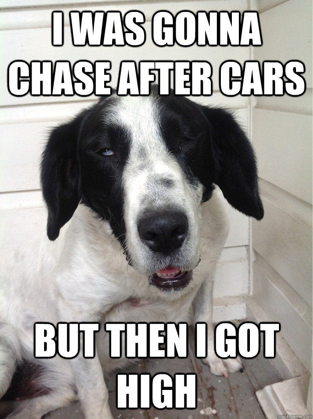 I was gonna chase after cars but then i got high - I was gonna chase after cars but then i got high  Misc