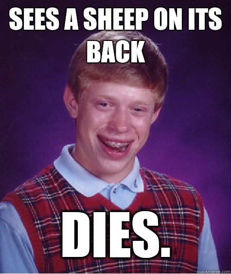 Sees a sheep on its back Dies. - Sees a sheep on its back Dies.  Bad Luck Brian