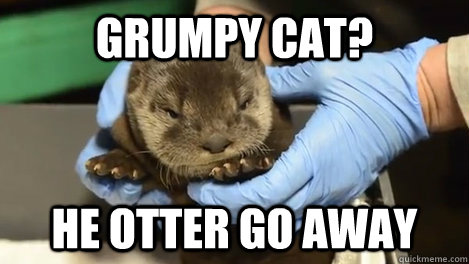 Grumpy Cat?  He otter go away - Grumpy Cat?  He otter go away  Misc