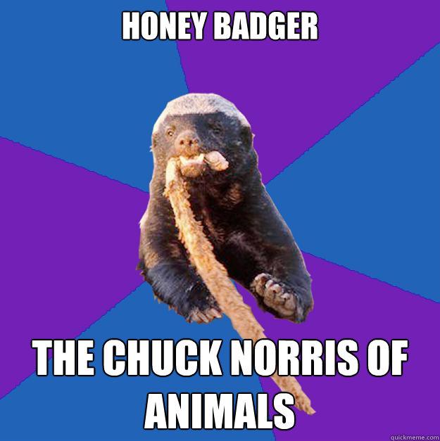 HONEY BADGER THE CHUCK NORRIS OF ANIMALS - HONEY BADGER THE CHUCK NORRIS OF ANIMALS  Honey Badger Dont Care