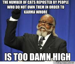 tHE NUMBER OF CATS REPOSTED BY PEOPLE WHO DO NOT OWN THEM IN ORDER TO KARMA WHORE is too damn high