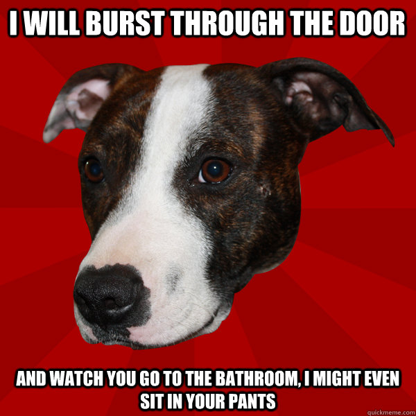 I will burst through the door and watch you go to the bathroom, I might even sit in your pants  Vicious Pitbull Meme