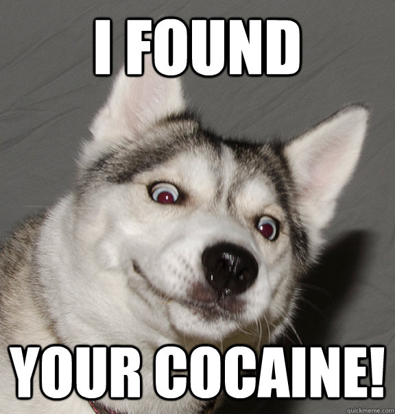 I found your cocaine! - I found your cocaine!  Insane Husky