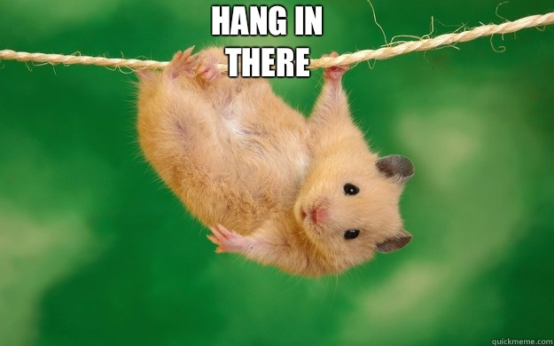 hang in there  - hang in there   Misc