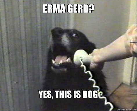 ERMA GERD? Yes, this is Dog  yes this is dog