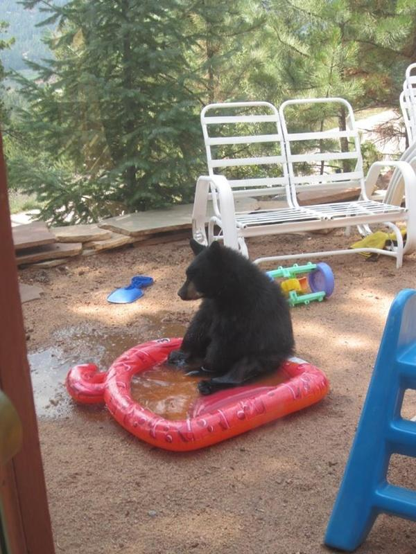 Sad bear popped a hole in my friend's pool :(  -   Misc