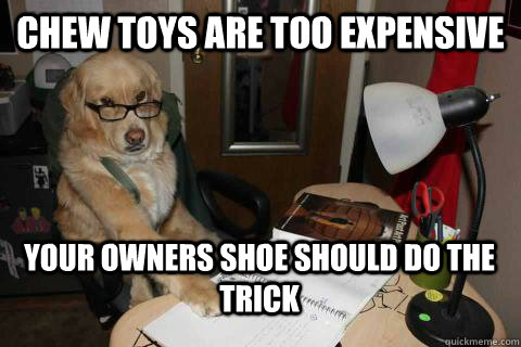 Chew toys are too expensive your owners shoe should do the trick - Chew toys are too expensive your owners shoe should do the trick  Financial Advice Dog
