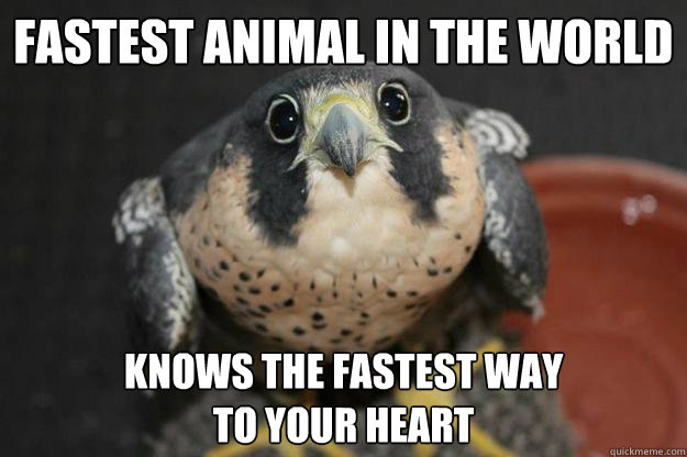Fastest Animal in the World Knows the Fastest Way  To Your Heart - Fastest Animal in the World Knows the Fastest Way  To Your Heart  Puppydog Peregrine Falcon