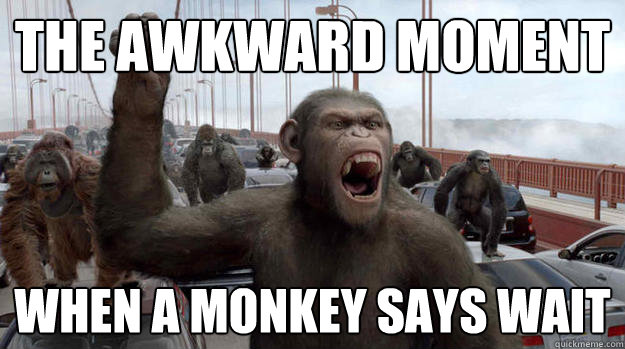 the awkward moment when a monkey says wait