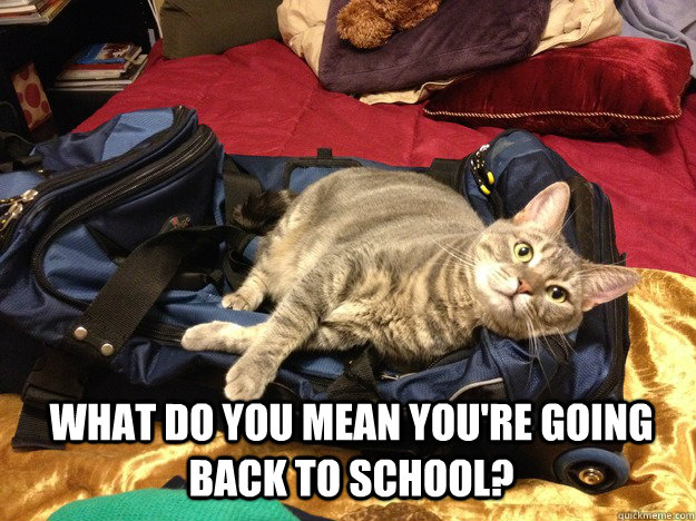 What do you mean you're going back to school?