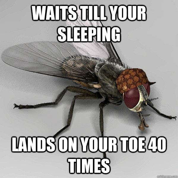 waits till your sleeping lands on your toe 40 times - waits till your sleeping lands on your toe 40 times  Scumbag Fly