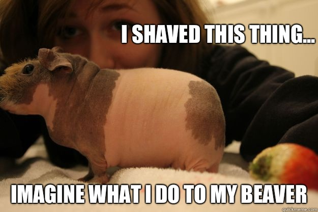 Recommend you Brown beaver shaved