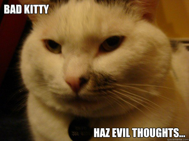 Bad Kitty  Haz Evil Thoughts...