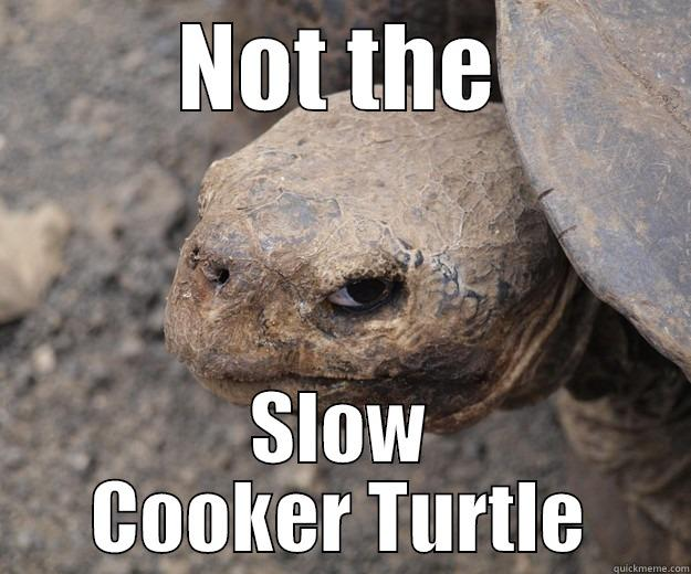 NOT THE SLOW COOKER TURTLE Angry Turtle