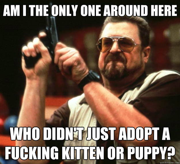 Am I the only one around here who didn't just adopt a fucking kitten or puppy? - Am I the only one around here who didn't just adopt a fucking kitten or puppy?  Big Lebowski