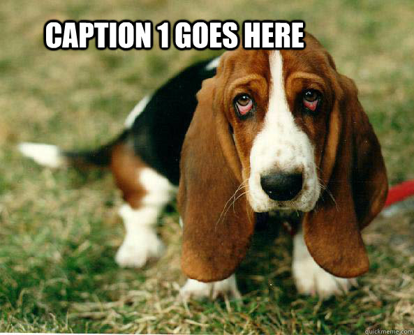 Caption 1 goes here  Basset Hound of guilt